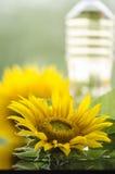 Sunflower and sunflower oil bottle Stock Photos