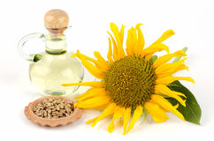 Sunflower, sunflower seeds and sunflower oil (Helianthus annuus L.) Stock Images