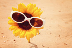 Sunflower with sunglasses on beach Stock Photos