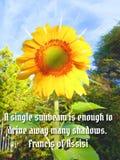 Sunflower sunlight