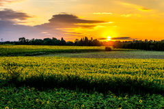 Sunflower Sunset. Scenic sunset over a field of sunflowers in France Stock Photography