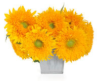 Sunflower Sunshine Stock Image