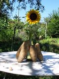 Sunflower and potato art royalty free stock photo