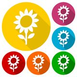 Sunflower symbol icons set with long shadow Royalty Free Stock Images