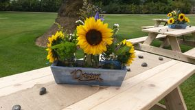 Sunflower table decoration Stock Images