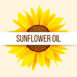 Sunflower and text royalty free illustration