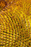 Sunflower texture closeup Stock Photos