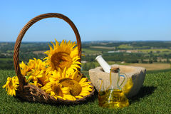 Sunflower-three. Production of sunflower oil natural Royalty Free Stock Photos