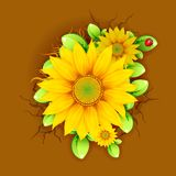 Sunflower from Top View Stock Photos