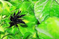 Sunflower under bright sunlight Royalty Free Stock Photos