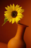 Sunflower in vase Stock Photo
