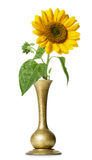 Sunflower in vase Royalty Free Stock Photos