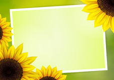 Sunflower vector background  with frame Royalty Free Stock Photo
