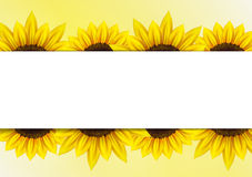 Sunflower vector background  with frame Royalty Free Stock Image
