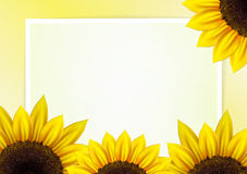 Sunflower vector background  with frame Stock Photography