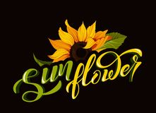 Sunflower vector clip art with hand lettering sign calligraphy flower name yellow autumn botany illustration. S royalty free illustration
