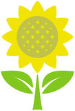 Sunflower –vector illustration Royalty Free Stock Photography