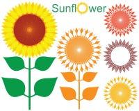 Sunflower. Vector illustration (EPS 10 royalty free illustration