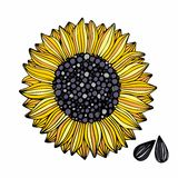 Sunflower. Vector illustration. Hand drawing for design Stock Photos