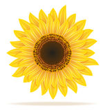 Sunflower vector illustration Royalty Free Stock Photography