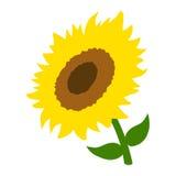 Sunflower vector illustration Stock Photography
