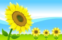 Sunflower vector illustration Stock Photos