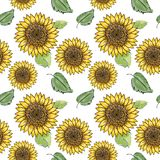 Sunflower vector seamless pattern with green leaves, imitating ink and watercolor on white background. Hand-drawn flower heads. royalty free illustration
