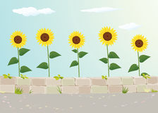 Sunflower View Near Roadside Royalty Free Stock Image