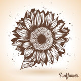 Sunflower in vintage style. Stock Images