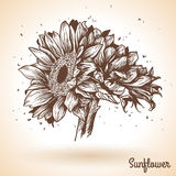 Sunflower in vintage style. Royalty Free Stock Images