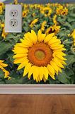 Sunflower Wallpaper on Interior Wall Royalty Free Stock Photos