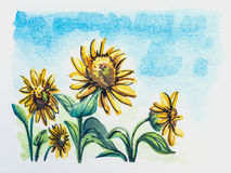 Sunflower watercolor painted Stock Photos