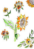 Sunflower watercolor. Sunflower in watercolor on a white background Stock Images