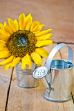 Sunflower and watering can Stock Photography