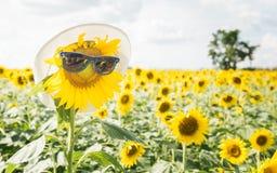 Sunflower wear sunglasses Stock Images