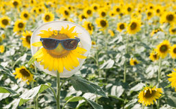 Sunflower wear sunglasses Royalty Free Stock Photo