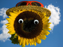 Sunflower wearing a hat. Sunflower with eyeballs wearing a hat Royalty Free Stock Image