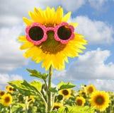 Sunflower wearing pink sunglasses Royalty Free Stock Photo