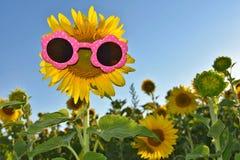 Sunflower wearing sunglasses Stock Photography