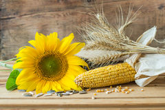 Sunflower, wheat and corn Stock Photography
