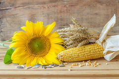 Sunflower, wheat and corn Stock Images