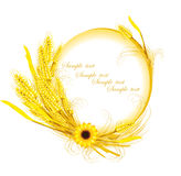 Sunflower with wheat decoration Stock Photos