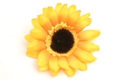 Sunflower on white. Isolated photo of a sunflower on white Stock Photo