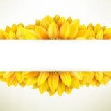 Sunflower on white background. EPS 10 Royalty Free Stock Photo