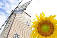 Sunflower with wind turbine Stock Images