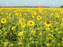 Sunflower and wind turbine Stock Photos