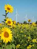 Sunflower and wind turbine Stock Image