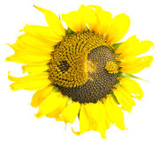 Sunflower With The Symbol Of Yin-yang Stock Photos