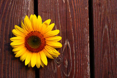 Sunflower On Wooden Background Royalty Free Stock Photos