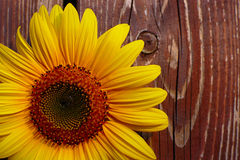 Sunflower On Wooden Background Royalty Free Stock Image